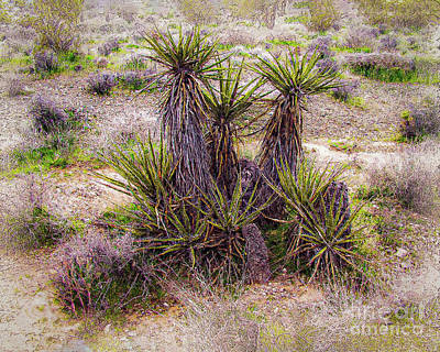 Digital Art - Desert Plant  Clr by Anthony Ellis
