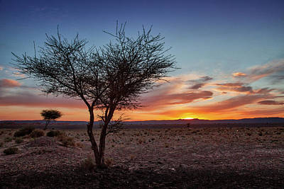 Photograph - Desert Sunset by Peter OReilly