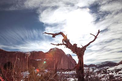 Photograph - Desert Tree by Jeanette Fellows