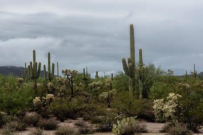 Photograph - Desert Weather Day  by Saija Lehtonen