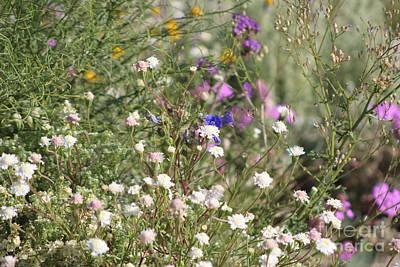 Katharine Hepburn - Desert Wildflowers Coachella Wildlife Preserve by Colleen Cornelius
