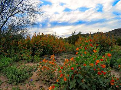 Photograph - Desert Wildflowers In The Valley by Judy Kennedy
