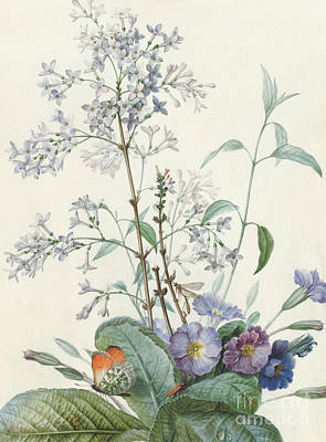 Painting - Detail Of A Bouquet Of Flowers With Insects by Pierre-Joseph Redoute