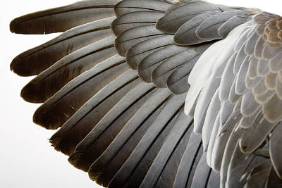 Detail Of A Wing Art Print by Grafissimo