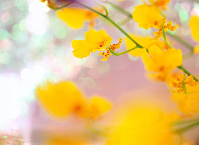 Yellow Photograph - Detail Of An Orchid by Daisuke Morita