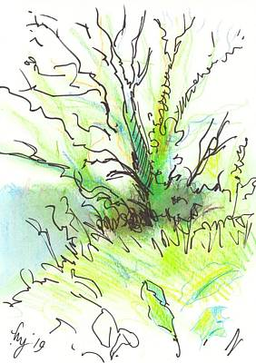 Drawing - Devon Tree Hedgerow Undergrowth Drawing by Mike Jory
