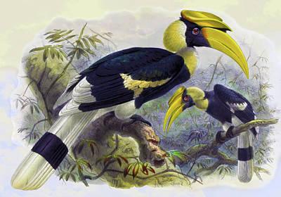 Animals Drawings - Dichoceros bicornis Hornbill Bird by John Gerrard Keulemans
