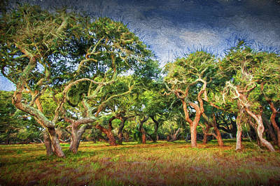 Photograph - Digital Photographic Painting Of A Grove Of Trees by Randall Nyhof