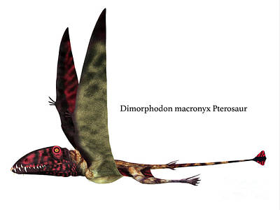Just Desserts - Dimorphodon Reptile Side Profile with Font by Corey Ford