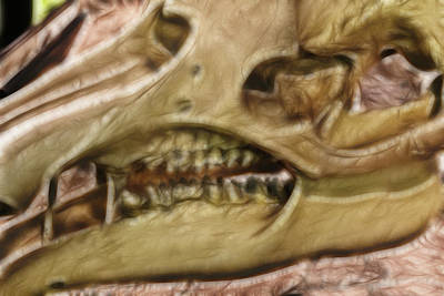 Photograph - Dinosaur Skull by Doc Braham