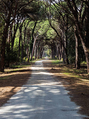 Photograph - Dirt pathway in a Mediterranean pine forest by Giovanni Bertagna