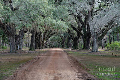Photograph - Dirt Road Avenue Of Oaks by Dale Powell