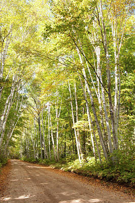 Thunder Bay Photograph - Dirt Road Lined With Trees In Autumn by Susan Dykstra / Design Pics
