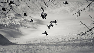 Birds In Snow Wall Art - Photograph - Discord by Photography By Spl