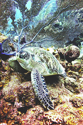 Photograph - Diva Turtle by Monique Taree