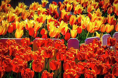 Photograph - Divided Tulips by Garry Gay