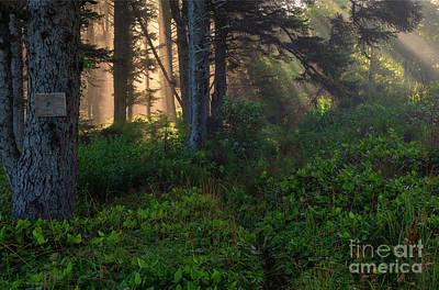 Photograph - Divine Path by Mike Dawson