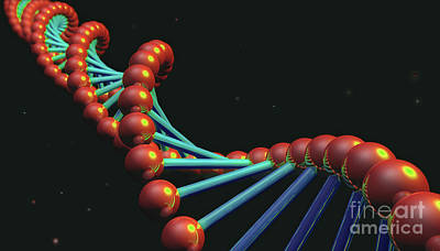 Photograph - DNA by Spencer Sutton