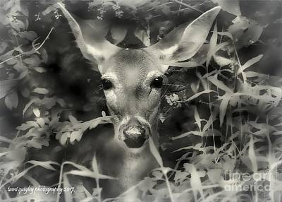 Photograph - Doe's Summer Portrait by Tami Quigley