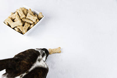 Photograph - Dog And Biscuits by Jeanette Fellows