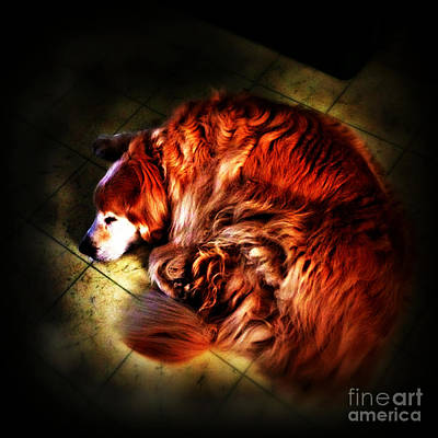 Frank J Casella Royalty-Free and Rights-Managed Images - Dog At Peace by Frank J Casella