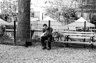 Photograph - Dog Days In New York City by John Rizzuto