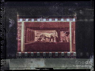 Digital Art - Dog In The Window by Phil Perkins
