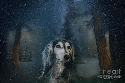 Dog In Winter Art Print