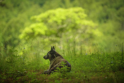 Photograph - Dog on a Hot Day in the Shade by SL Ernst