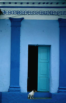 Latin America Photograph - Dog Outside Entrance To Colourfully by Jeffrey Becom