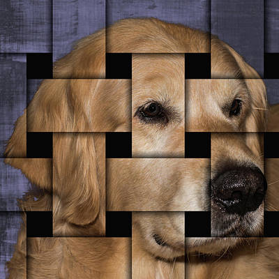 Photograph - Dog Puzzle by Jennifer Grossnickle