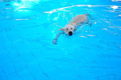 Dog Swimming Wall Art - Photograph - Dog Swimming In The Pool by Image By Hugo Chinaglia