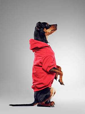 Photograph - Dog Wearing Hooded Sweatshirt by 24frames