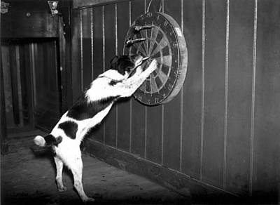 Photograph - Doggy Darts by N Smith