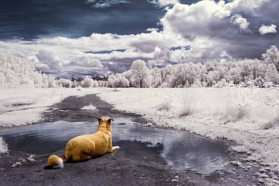 Photograph - Doggy Daydream by Nicole Young