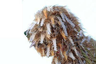 Photograph - Doggy Dreads by Greg Wickenburg