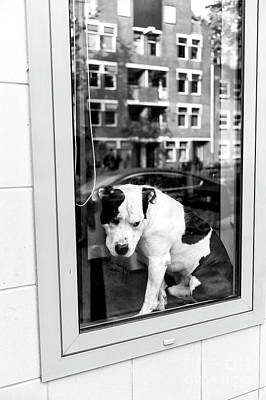 Photograph - Doggy In The Window Amsterdam by John Rizzuto
