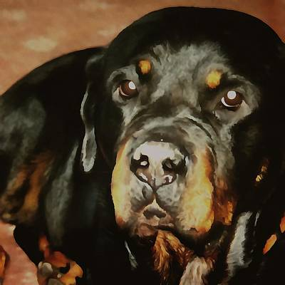 Painting - Dogs Lover Rottweiler Pet Portrait by Taiche Acrylic Art