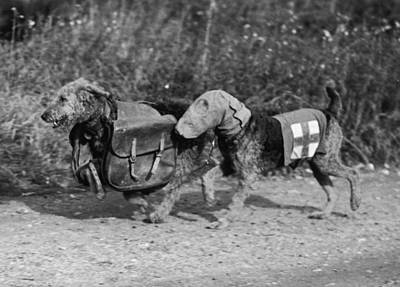 Photograph - Dogs Of War by Fox Photos
