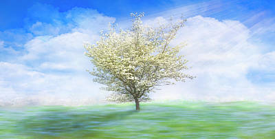 Photograph - Dogwood In The Mist Dreamscape by Debra and Dave Vanderlaan