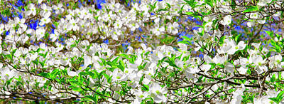 Photograph - Dogwood Tree In Bloom by The American Shutterbug Society