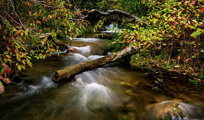 Photograph - Dogwoods Along The Provo Deer Creek by TL Mair