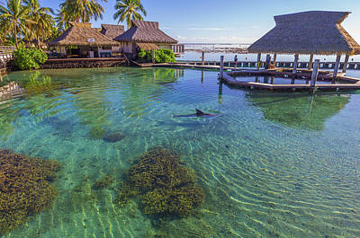 Photograph - Dolphin In Mo'orea French Polynesia by Scott McGuire