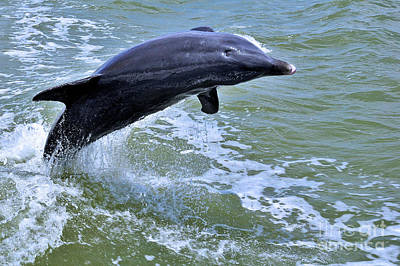 Photograph - Dolphin Jump by Elaine Manley