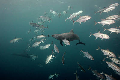 Photograph - Dolphins Smile by Dmitry Miroshnikov