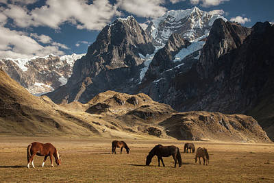 Photograph - Domestic Horse Equus Caballus Herd by Colin Monteath/ Hedgehog House/ Minden Pictures