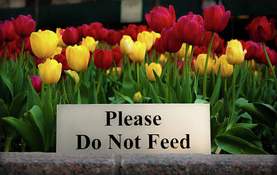 Dont Feed The Tulips Art Print
