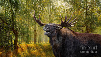 Photograph - Don't Play Fast And Moose With Me by Kira Bodensted