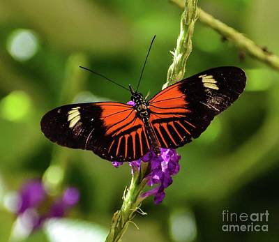 Beverly Brown Fashion - Doris Longwing by Cindy Treger