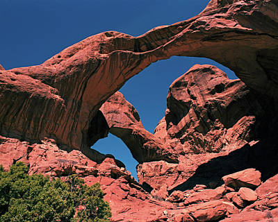 Photograph - Double Arch And Juniper by Tom Daniel